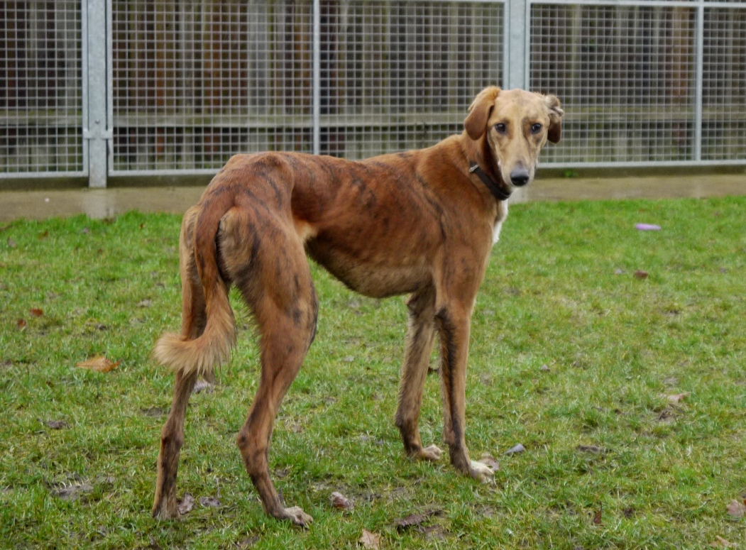 Small Dogs For Rehoming In Norfolk